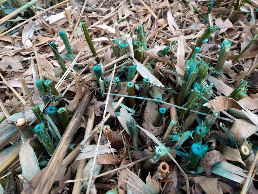 bamboo sprayed
